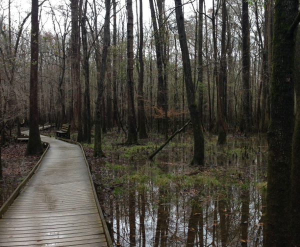 Flooded forest at Congaree