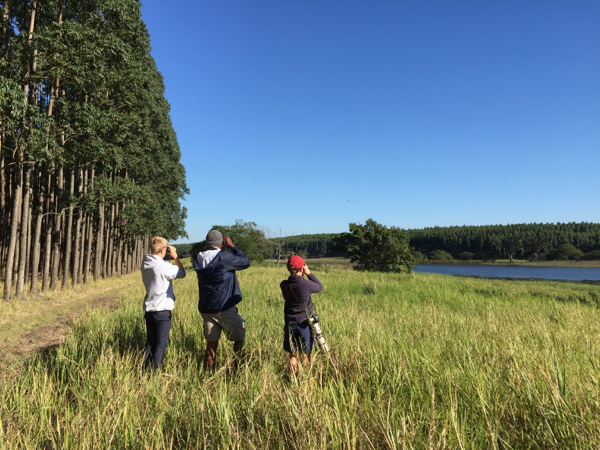 Birding close to Mtunzini