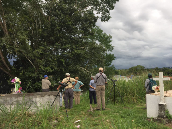 Looking for Bicoloured Wren in the Yaviza Cemetery