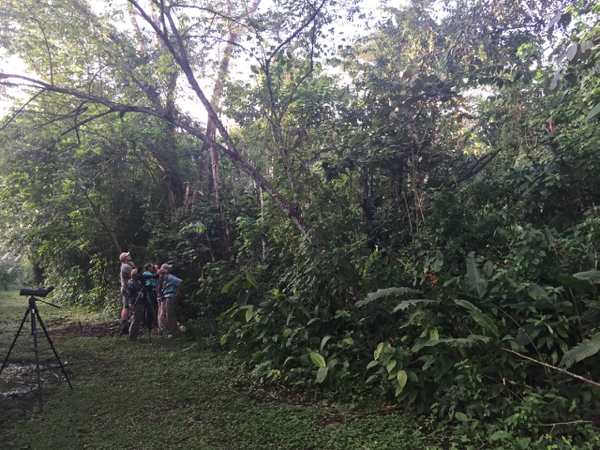 The Rosy Thrush-tanager hunt begins