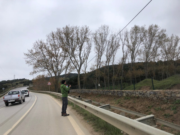 Emin continues the search for a Syrian Woodpecker, right alongside the highway